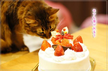 新宿・高野フルーツクリスマスケーキと猫のモンさん