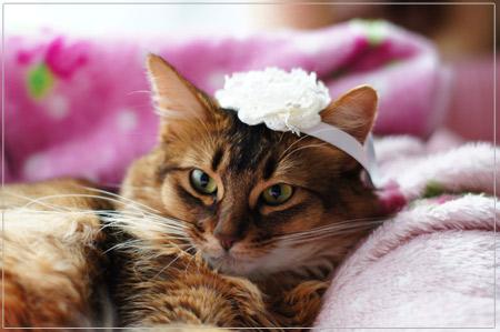 ヘッドドレス姿@猫のモンさん