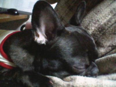いつもいつも寝てる写真ばっかり