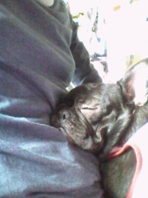普通に寝てる顔