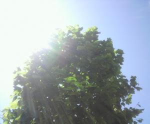 今日はキレイな青空でした~!