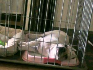 ミコは・・・トイレで寝てるよ。