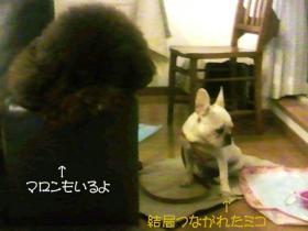 ミコの指定席