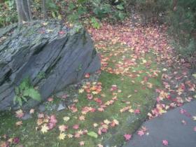 紅葉の絨毯-ピンクっぽくて可愛かったよ