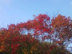 薄いけどキレイな青空と紅葉