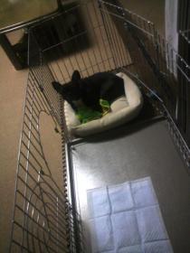 マツリ、ミコのケージで寝る