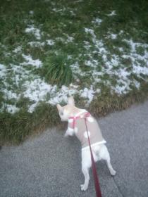 雪が少し残ってましたよ!