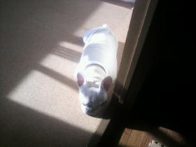 ミコは寝室の入り口