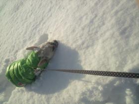 ミコ、初フカフカ雪に