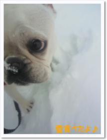ミコ、雪食べたのバレるよ!