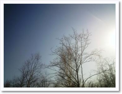 空と木とちょっとのお日さま