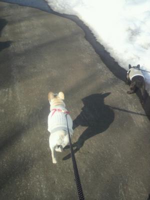 ふたりも今日はセーターだよ。