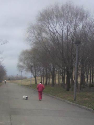 パパのクールダウン兼て散歩