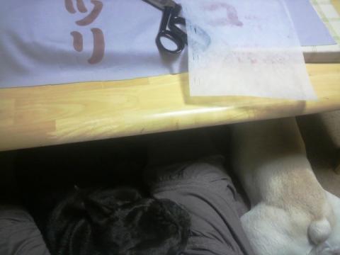 いつものようにママ近くで寝るふたり。