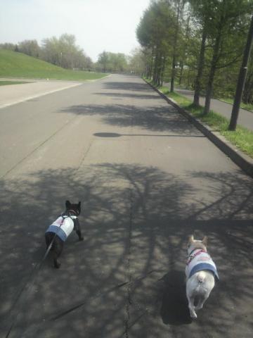 散歩はじめ。