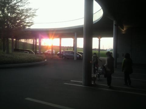 きれいな夕日。