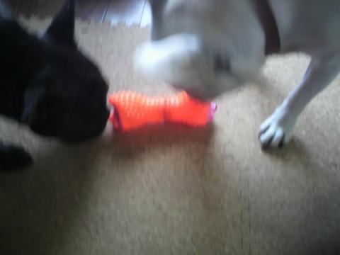 こういうおもちゃだね。