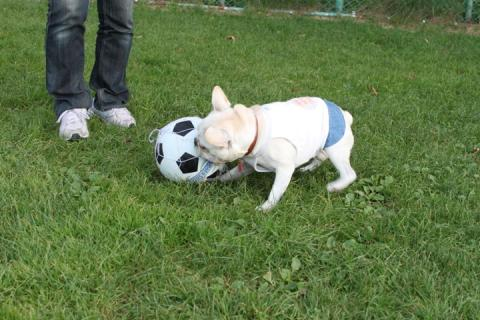 ボールを守るミコ