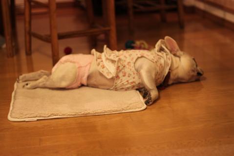 ミコもいつも通り寝たよ。