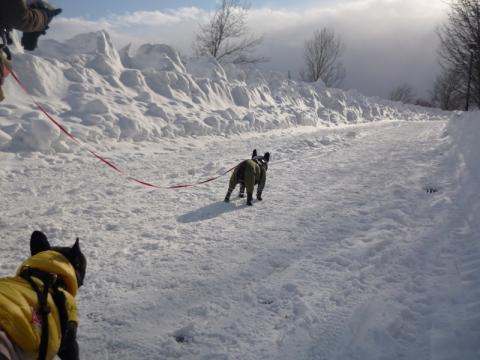 道路も除雪入ってたし!