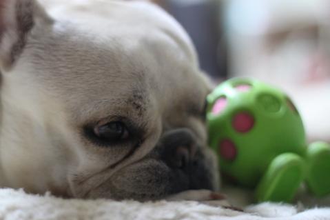 ミコはおもちゃが似合う。