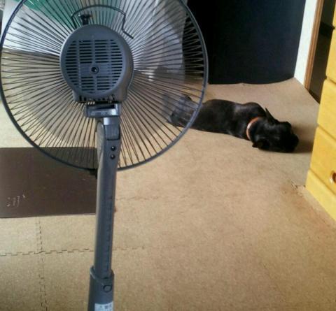 マツリも暑いってー