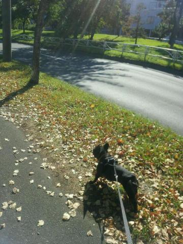 散歩たのしー!