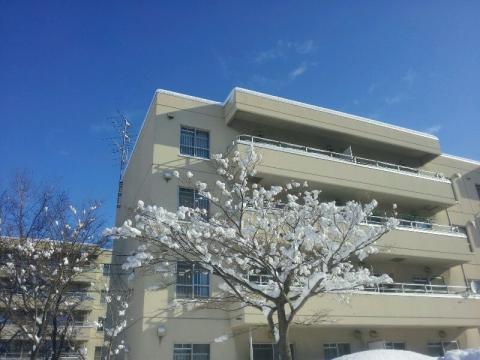 木の雪が丸くて可愛い