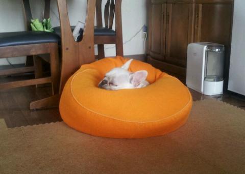 ミコも、寝る。