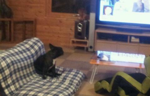 テレビ見てるLEON