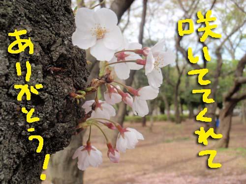 P4184951.jpg