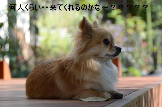 DSC_0217_01_20110113195618.jpg