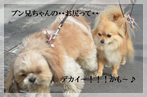 DSC_0220_01_20110227101729.jpg