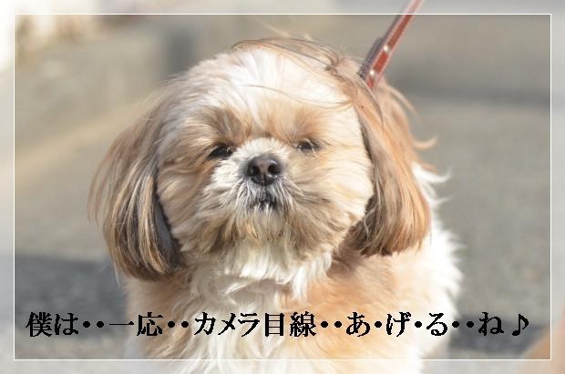 DSC_0288_01.jpg