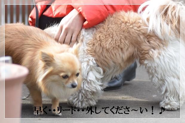DSC_0298_01_20110227103945.jpg