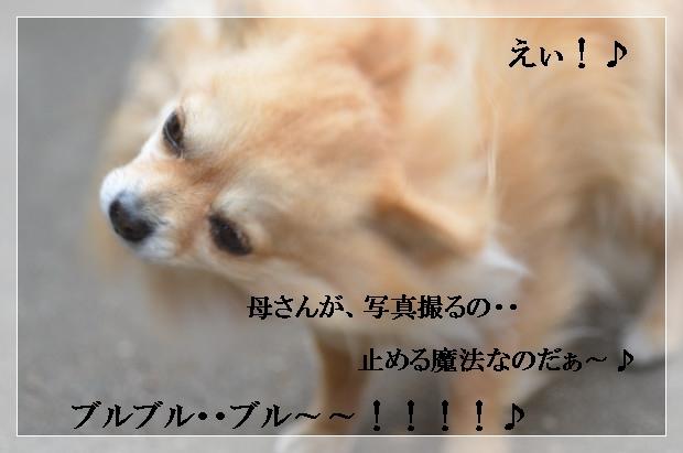 DSC_0306_01_20110227104536.jpg
