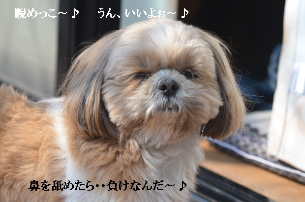 DSC_0316_01_20110227211015.jpg