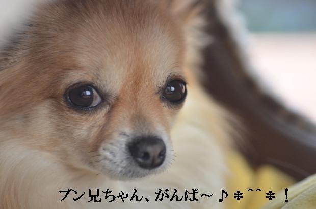 DSC_0369_01_20110227212020.jpg