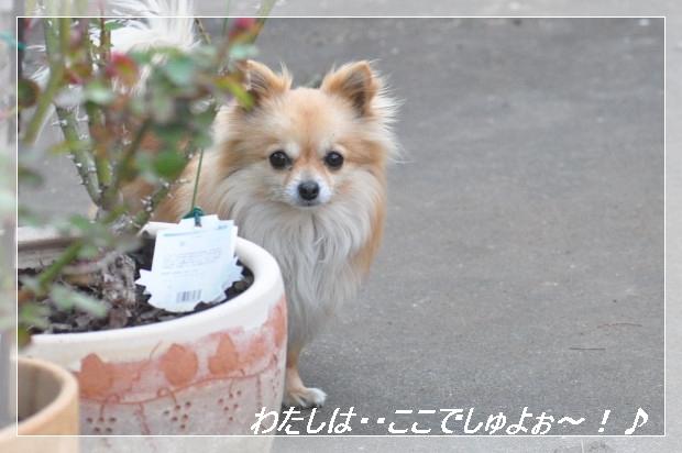 DSC_0538_01.jpg