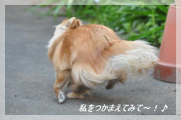DSC_0539_01.jpg