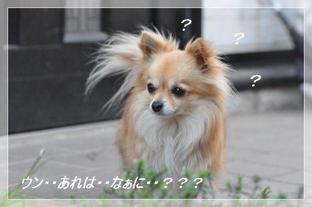 DSC_0546_01_20110405155320.jpg