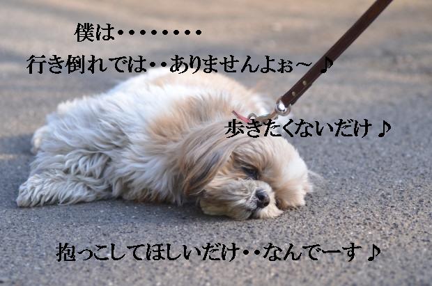 DSC_0571_01_20110227213918.jpg