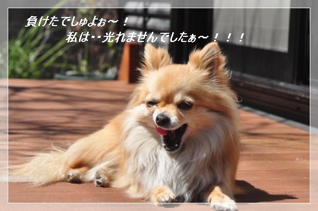 DSC_0574_01_20110407135312.jpg