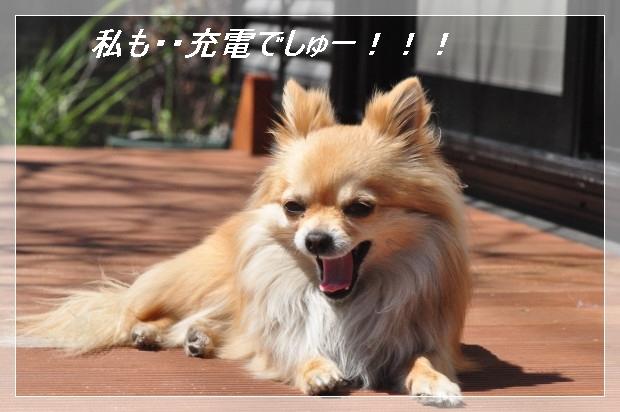 DSC_0575_01_20110405155546.jpg