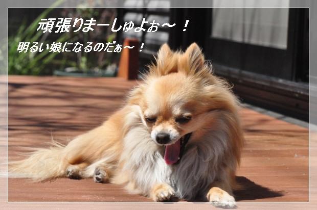 DSC_0577_01_20110405155717.jpg