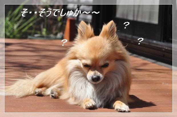 DSC_0578_01_20110405160345.jpg
