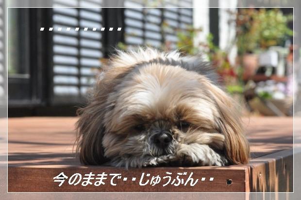 DSC_0612_01_20110405160513.jpg
