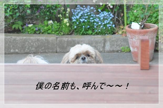 DSC_0900_01.jpg