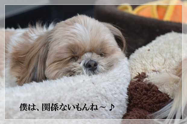 DSC_1183_01.jpg