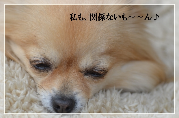 DSC_1184_01.jpg